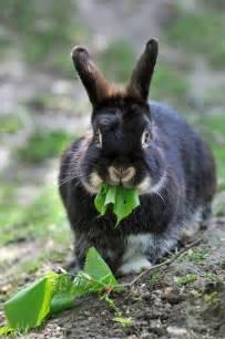 Peter Rabbit Easter Bunny