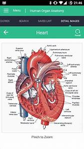Human Organs Anatomy Reference Guide V1 0 4  Pro