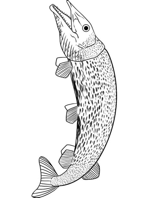 pike coloring pages   print pike coloring pages