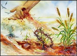 The, Seed, U0026, The, Sower