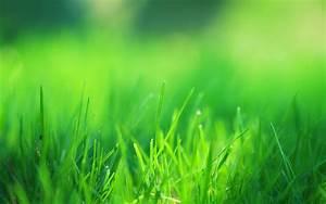 Green Grass Field Wallpaper | www.pixshark.com - Images ...