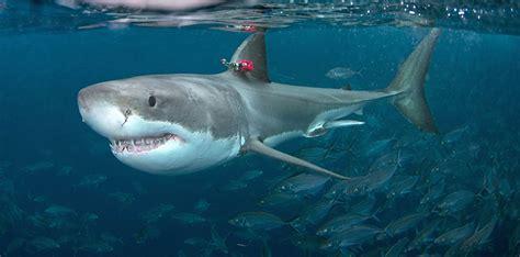Shark Wallpapers: Free HD Download [500+ HQ] | Unsplash