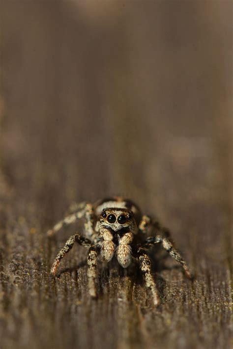 met deze zeven grote spinnen reis je vandaag naar het werk binnenland adnl