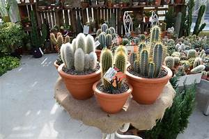 Jardin Des Plantes La Rochelle : jardin de cactus et plantes grasses jardin de cactus et plantes grasses with jardin de cactus ~ Melissatoandfro.com Idées de Décoration