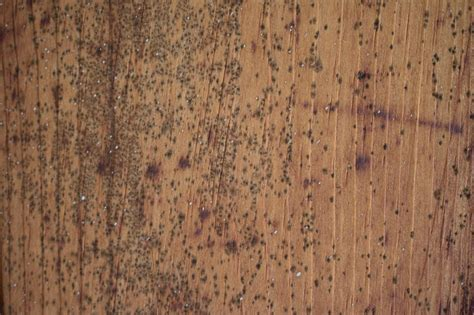 remove mold   wooden ceiling hgtv