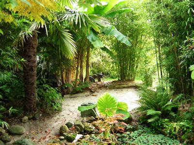 evasion  depaysement au coeur des bambous ca se passe