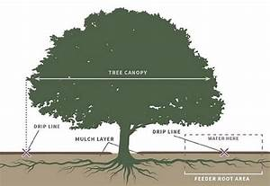 Soil Water And Tree Diagram