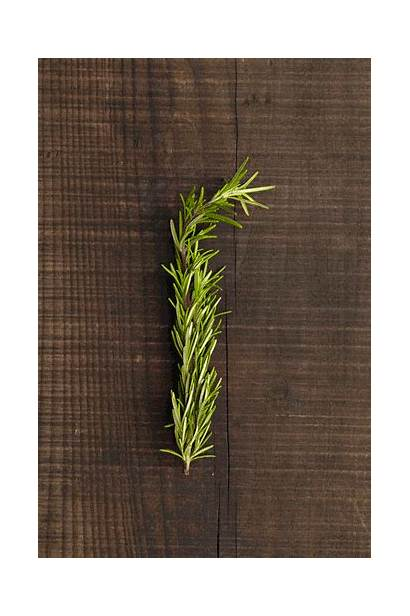Rosemary Stress Herb Relieve Scents Instantly Almost