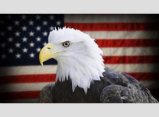UltraHD Flag Of The USA Waving In The Wind With Bald