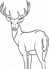 Deer Coloring Easy Tulamama sketch template