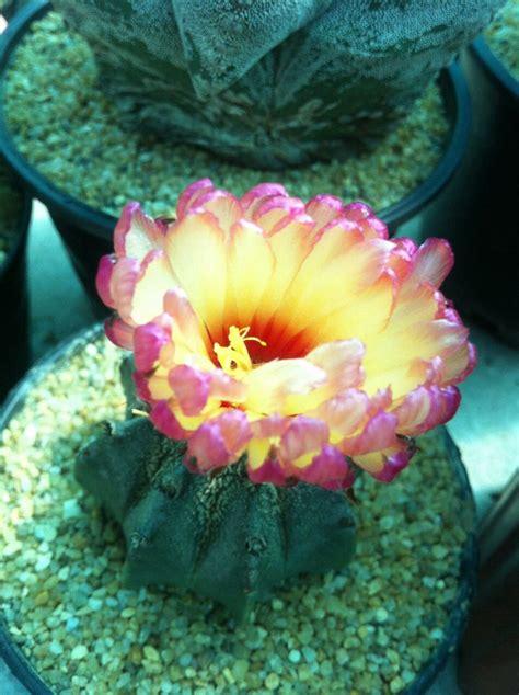 ดอกสีชมพู | ดอกไม้, กล้วยไม้