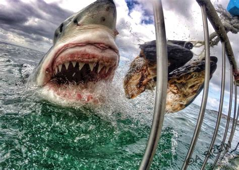 shark attack   viral photo
