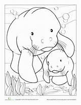 Coloring Manatee Pages Worksheets Cow Manati Worksheet Education Manatees Animals Animal Drawing Sheets Florida Kindergarten Printable Preschool Crafts Colouring Sea sketch template