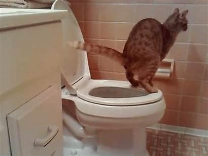 Gifs Gatos Graciosos Chat Caca Compartir Cat