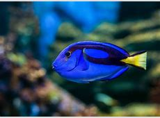 To protect coral reefs, keep Dory swimming ShareAmerica