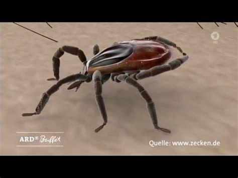 Welche Mücken Summen by Welche Mittel Wirklich Gegen Zecken Und M 252 Cken Helfen Ard