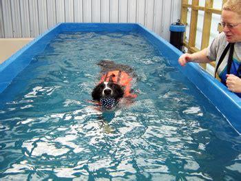 Swimming Pools For Dogs Style Pixelmari