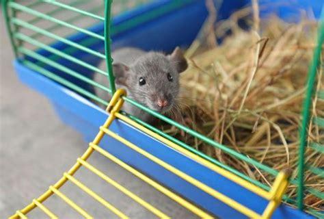 jeux de rat jeux pour rat fait maison 5 id 233 es
