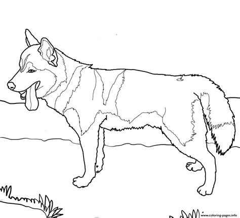 siberian husky dog coloring pages printable
