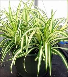 Schnell Wachsende Zimmerpflanzen Beliebte Asiatische Pflanzen Und