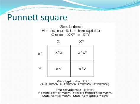 Sex Linked Punnet Squares