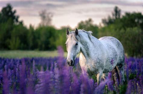 names horse famous horses female snow pet unicorn puns tiana pearl star willow