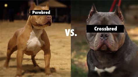 purebred vs mixed bred breeds cross