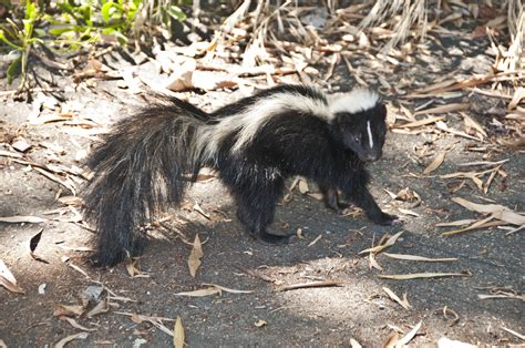 List Of Synonyms And Antonyms Of The Word Skunk Nest