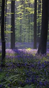 Wallpaper, Forest, Bluebell, Sunlight, Spring, Halle