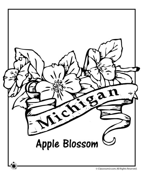 State Flower Coloring Pages Michigan State Flower Coloring Page – Classroom Jr. | Flower