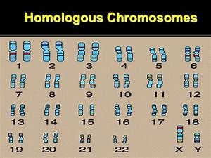 DNA in the Cell Inside the nucleus are chromosomes, which ...