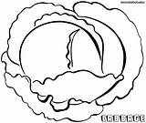 Cabbage Coloring Coloringway sketch template