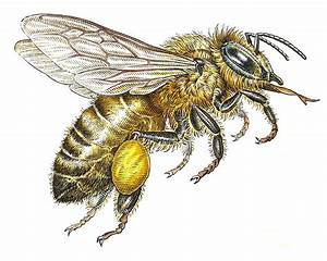 Vintage Bee | Posted in Uncategorized | Leave a Comment ...