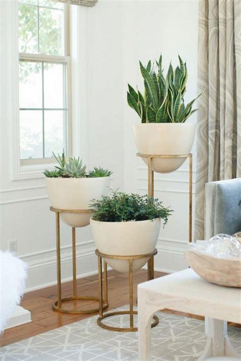 pflegeleichte zimmerpflanzen mit blüten pflanzen dekoration wohnzimmer