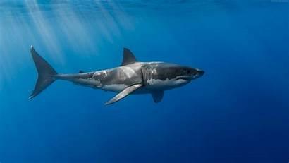 Shark Underwater Wallpapers 4k Cave