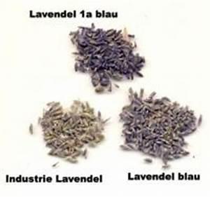 Lavendel Sorten übersicht : lavendelbl ten kaufen und bestellen ~ Eleganceandgraceweddings.com Haus und Dekorationen