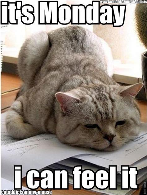 Monday Cat Meme - monday micritterchitter