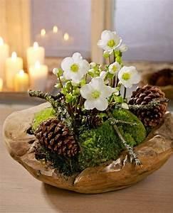 Welche Blumen Blühen Im Winter Draußen : die christrose erfreut uns im winter mit ihren wei en zarten bl ten ~ Watch28wear.com Haus und Dekorationen