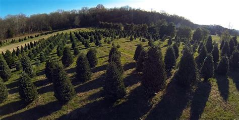 christmas tree farm tennessee photo album best christmas