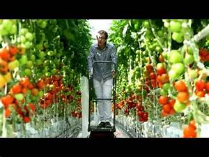 Comment Tuteurer Les Tomates : tomates pourquoi et comment les cultive t on sous serre ~ Melissatoandfro.com Idées de Décoration