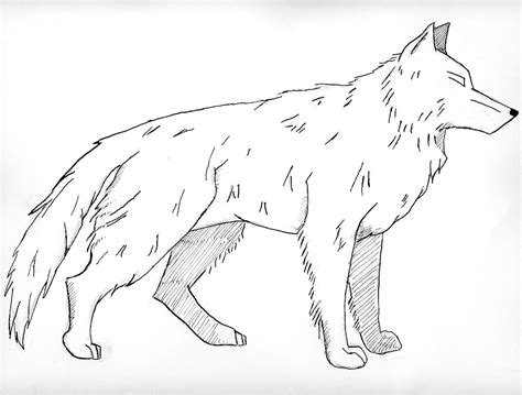 Realistic Wild Animal Coloring Pages Color Bros