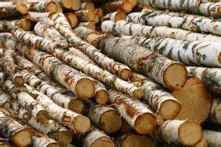ideas  tree bark crafts  pinterest branches