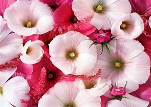 World's Top 100 Beautiful Flowers Images Wallpaper Photos ...