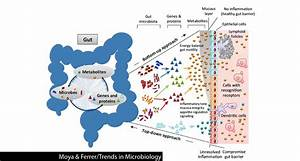 Is our gut microbiome stable or ever-changing? - Gut ...
