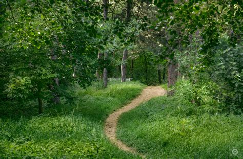 forest trail background high quality  backgrounds