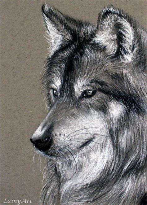 charcoal wolf portrait  lainyart lainyart