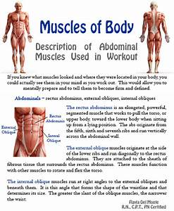 Fitness Tip Tuesday - Muscles of the Body - The Abdominal ...