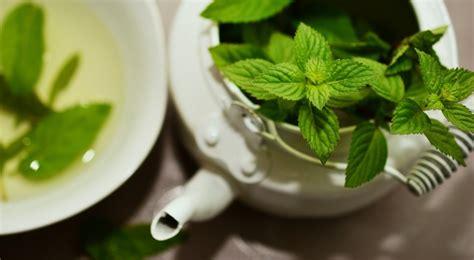 teesorten und ihre wirkung teesorten und ihre wirkung
