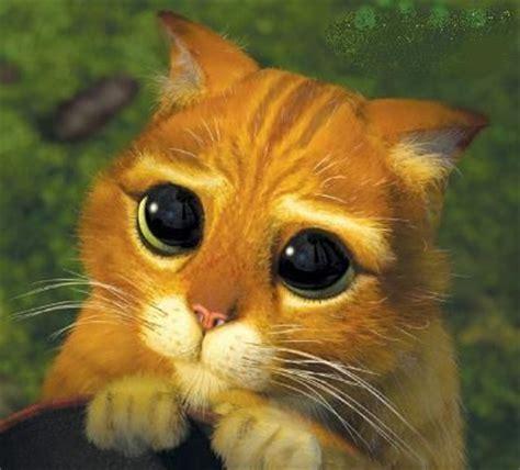 bureau des stages 10 por que dizem que os gatos têm sete vidas animais