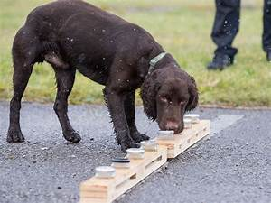 Sniffer dog trained to detect burst water pipes | E&T Magazine